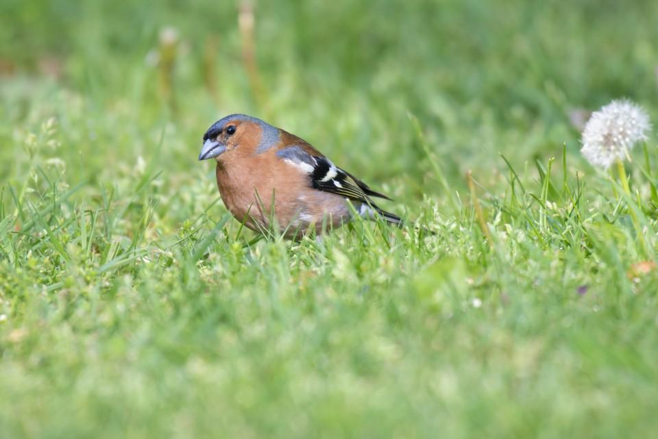 Voorkant van het fotoalbum vogels